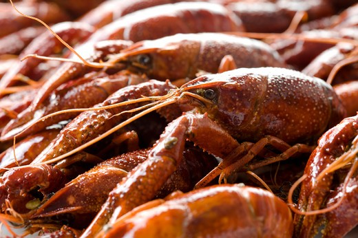 Close-up of a stack of lobsters : Stock Photo