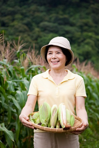 Stock Photo: 1397R-70474 Mature woman holding a sieve of corns in corn field, smiling