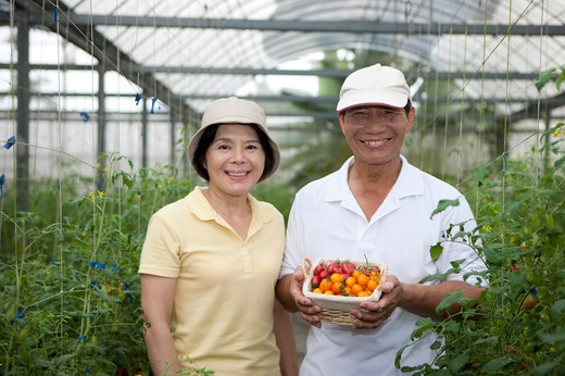 Stock Photo: 1397R-70505 Farmer couple in greenhouse, man holding a basket of cherry tomatoes