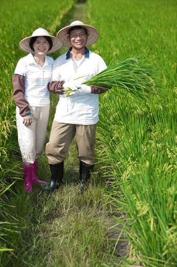 Stock Photo: 1397R-70545 Farmer couple standing in rice field, man holding rice plants