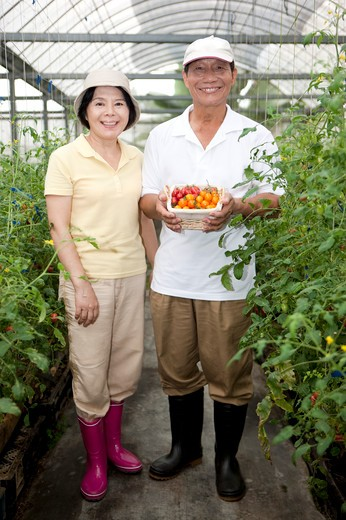 Stock Photo: 1397R-70565 Farmer couple standing in greenhouse, smiling, man holding a basket of cherry tomatoes