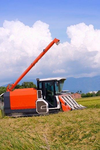 Rice, Modern Agriculture : Stock Photo