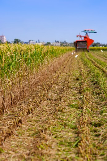 Stock Photo: 1397R-70778 Rice, Modern Agriculture