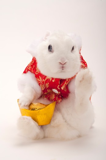 Rabbit in cotton-padded jacket holding gold ingot and lifting one leg : Stock Photo