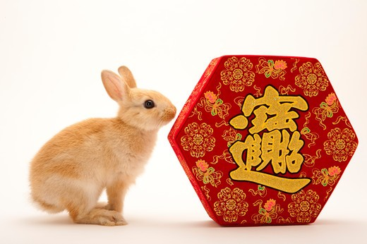 Stock Photo: 1397R-71938 Year of the rabbit, money and treasures will be plentiful