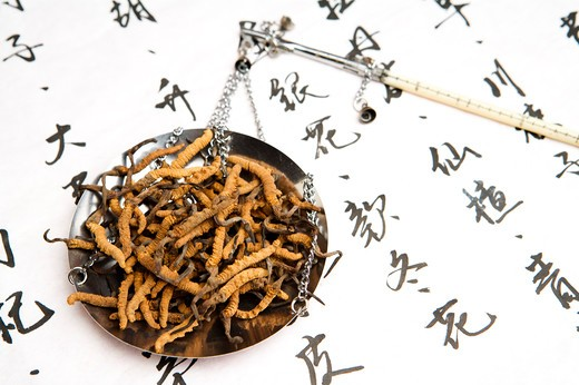 Stock Photo: 1397R-72107 Chinese Caterpillar Fungus, Chinese Herbal Medicine