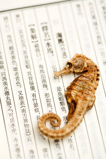 Stock Photo: 1397R-72131 Sea Horse, Chinese Herbal Medicine
