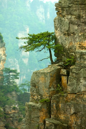 Mt Tianzi, Shentang Gulf, Zhangjiajie, Hunan Province, China, Asia : Stock Photo