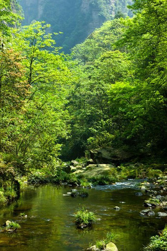 Stock Photo: 1397R-73263 Zhangjiajie National Forest Park, Golden Whip Stream, Zhangjiajie, Hunan Province, China, Asia