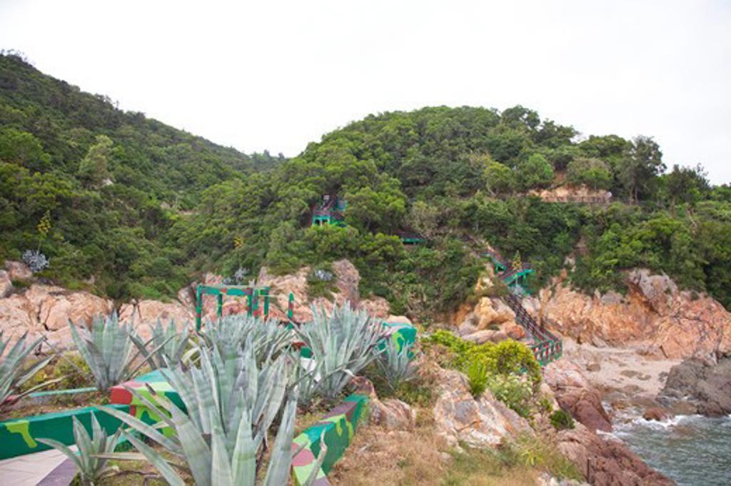 Woods in Matsu : Stock Photo