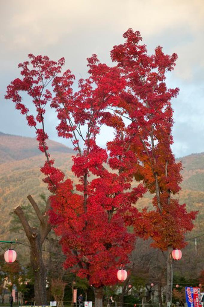 Yamanashi Prefecture, Japan, Maple Leaf, Asia, : Stock Photo