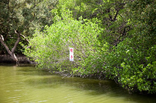 Stock Photo: 1397R-74306 Mangrove, Wetland, National Park, Tainan, Taiwan, Asia,