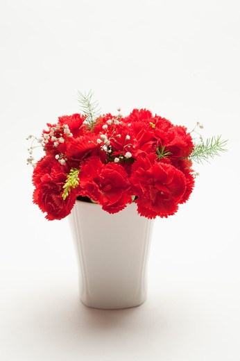 Stock Photo: 1397R-76407 Red carnations in vase