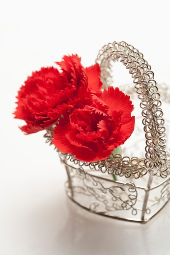 Stock Photo: 1397R-76433 Two red carnations in the basket