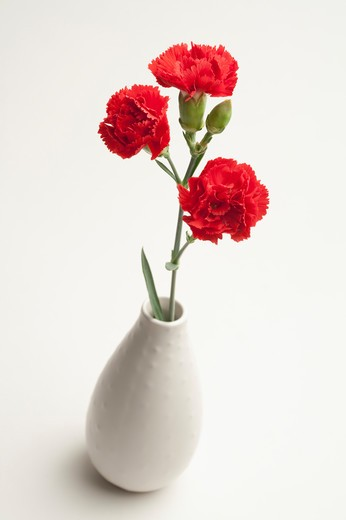 Stock Photo: 1397R-76435 Red carnations in vase