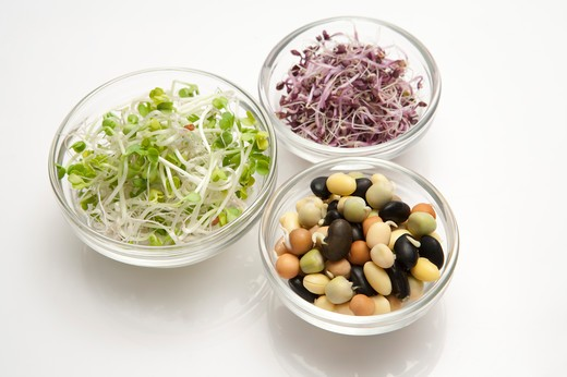 Stock Photo: 1397R-76511 Bean Sprout, Purple Cabbage sprout