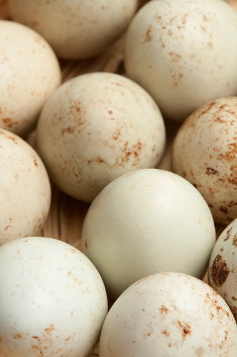Quail Egg : Stock Photo