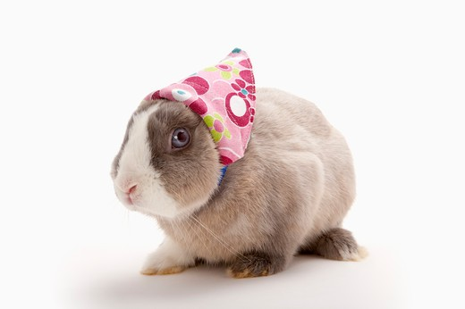 Stock Photo: 1397R-76877 Rabbit