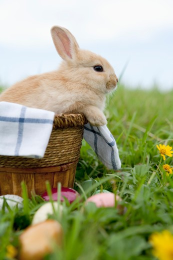 Stock Photo: 1397R-76888 Rabbit