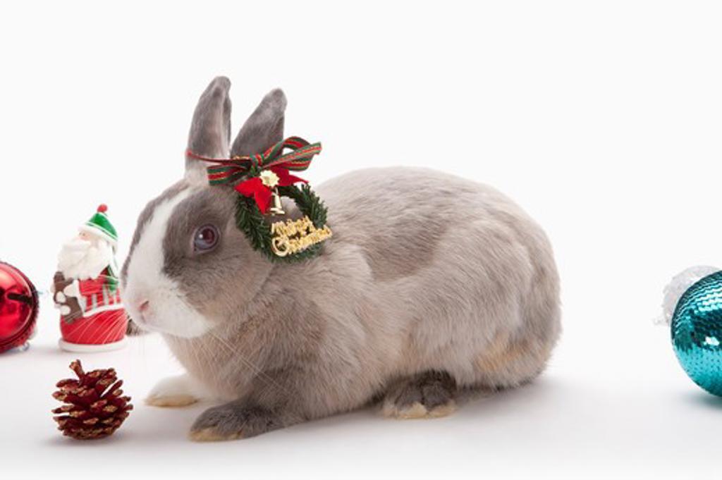 Stock Photo: 1397R-76935 Rabbit