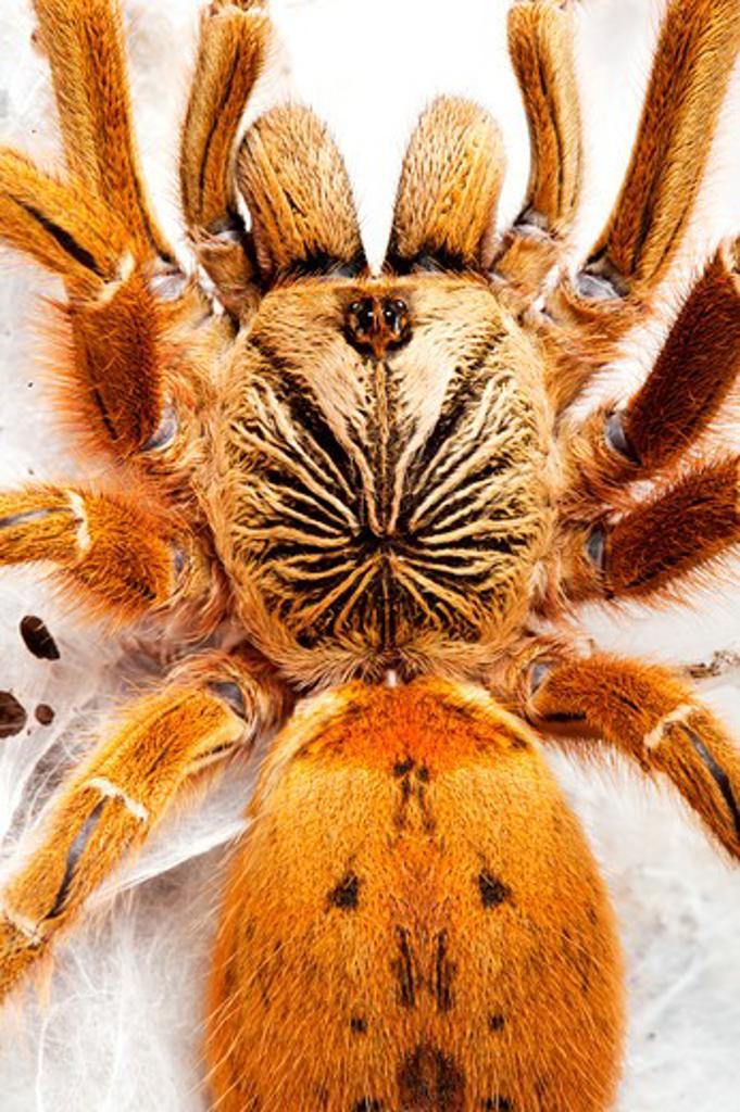 Spider : Stock Photo