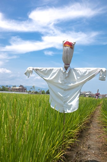 Stock Photo: 1397R-78383 Rice, Rice Paddy, Scarecrow, Yilan, Taiwan, Asia