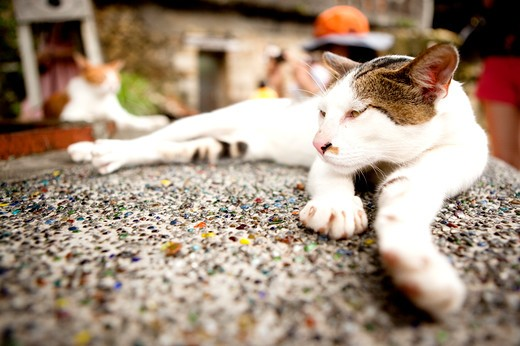Stock Photo: 1397R-78516 Cat,