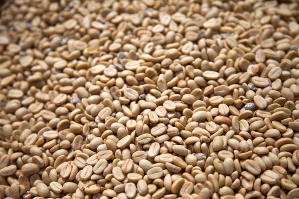 Stock Photo: 1397R-78541 Coffee Bean, Yunlin, Taiwan, Asia