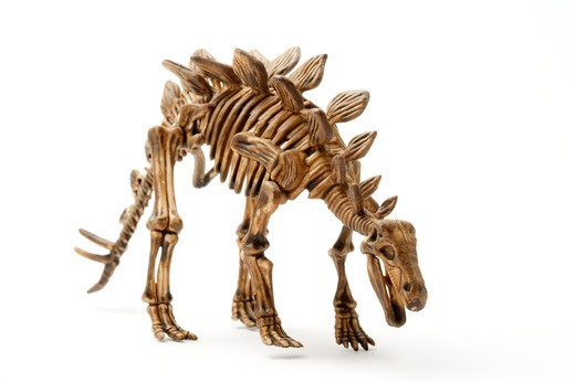 Stock Photo: 1397R-78620 Stegosaurus skeleton