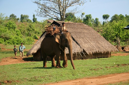 Stock Photo: 1397R-79497 Kid on an elephant in a village,Cambodia,Asia