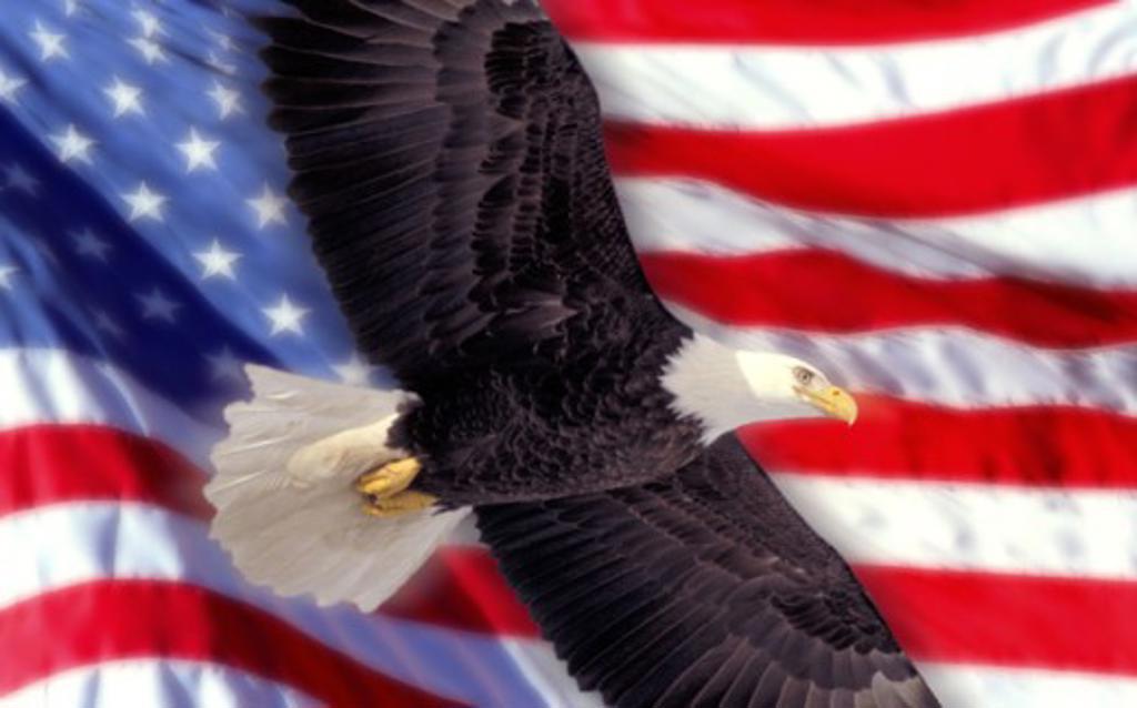 Stock Photo: 1400-136 Bald Eagle Flag of United States of America