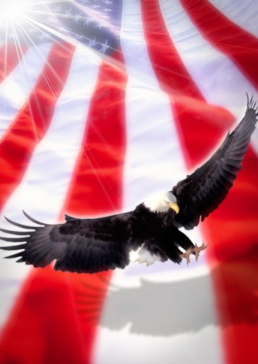 Stock Photo: 1400-458 Low angle view of a Bald Eagle flying in front of an American flag