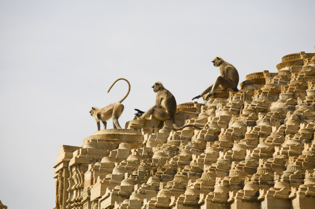 India, Rajasthan, Monkeys atop 15th century Samadhisuara Temple in Chittorgarh Fort : Stock Photo