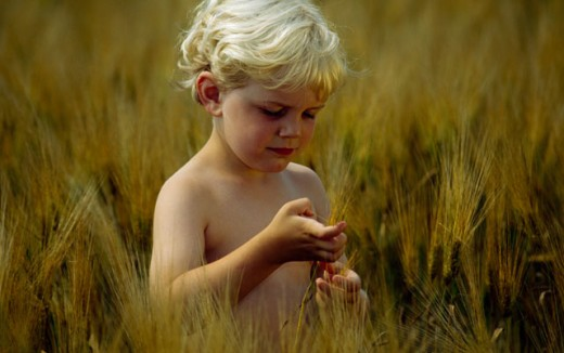 Close-up of a boy looking at a barley of wheat : Stock Photo