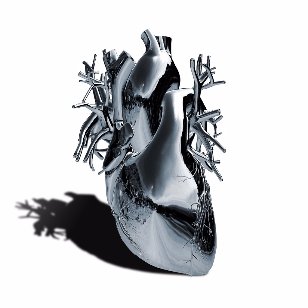 Stock Photo: 1428-1324 Human heart and major vessels with metallic chrome effect on white background