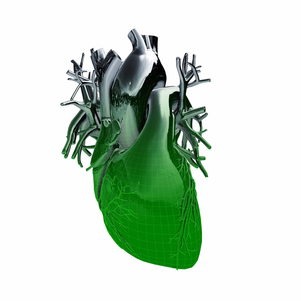 Electronic robotic treatment of human heart and major vessels with metallic chrome effect blending into green wire frame effect on white background : Stock Photo