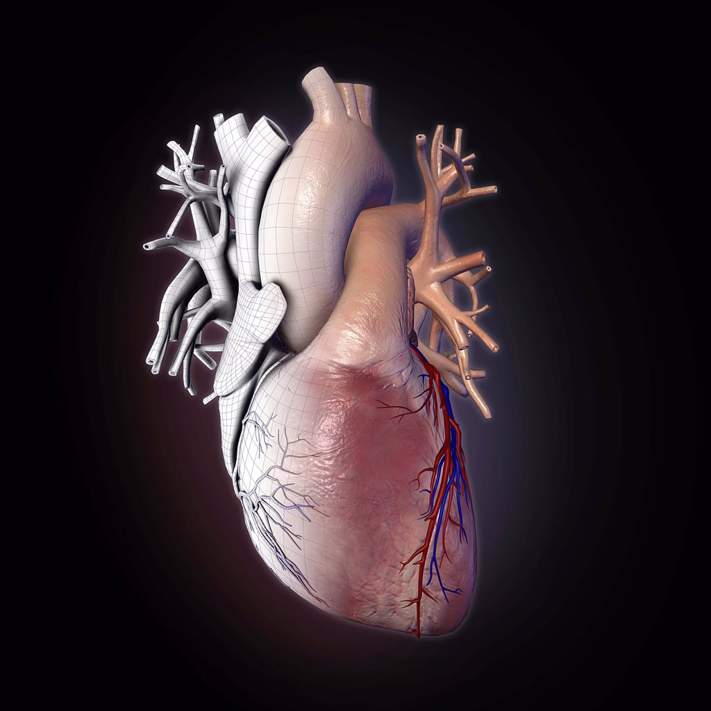Stock Photo: 1428-1338 Human heart with wire frame, appearing like frozen mechanical heart on black background