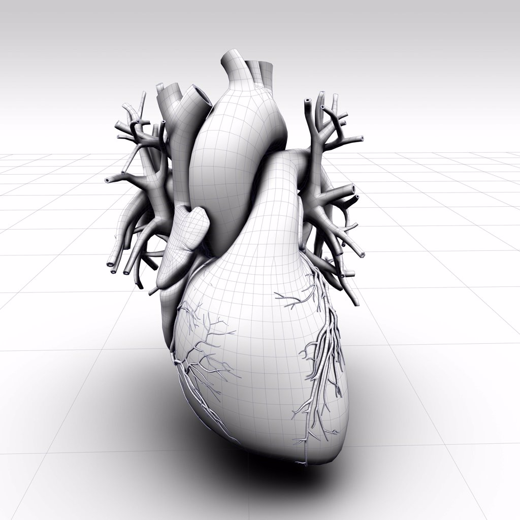 Stock Photo: 1428-1349 Heart 3D model shaded in white ambient wire frame look, on grid plane