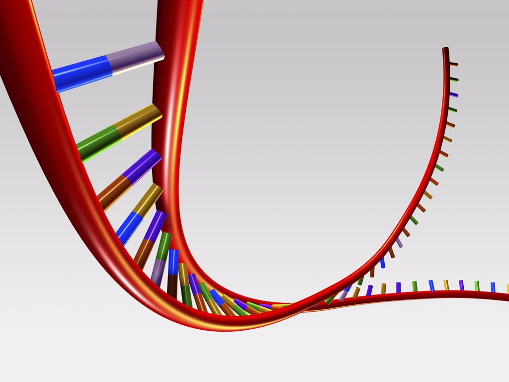 Close-up of a human DNA structure : Stock Photo