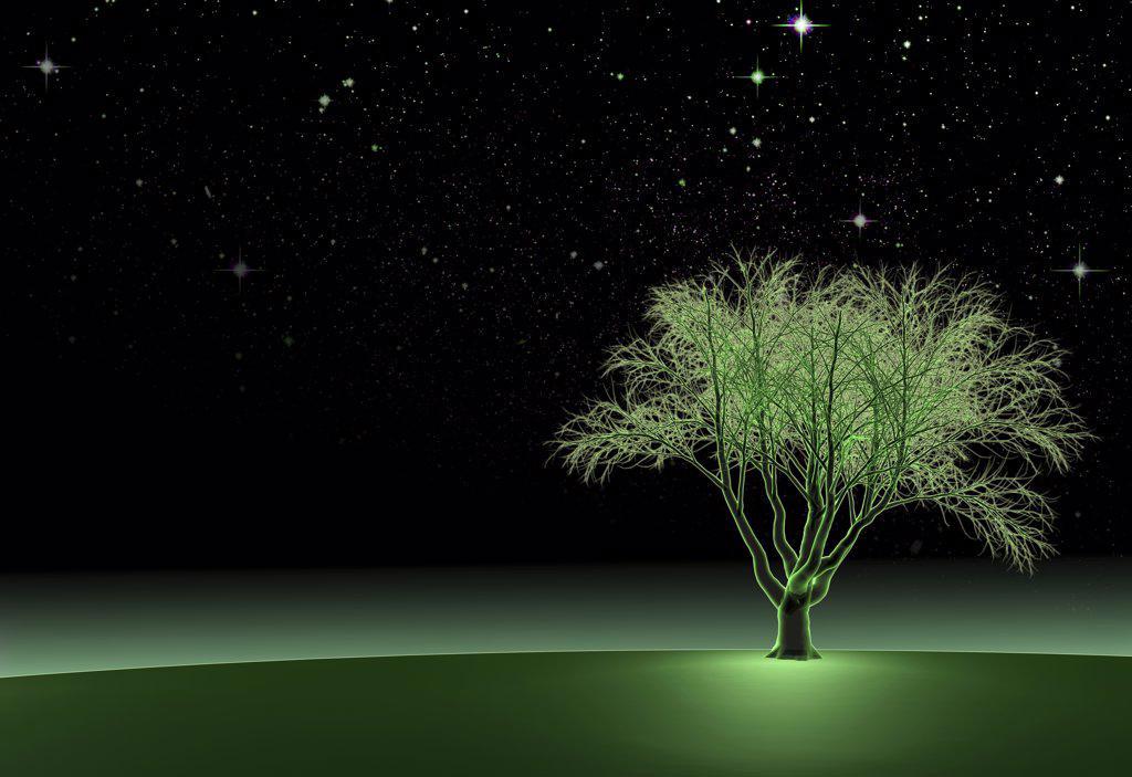 Green Oak Tree at Night II, Digitally Generated Image by Hank Grebe : Stock Photo