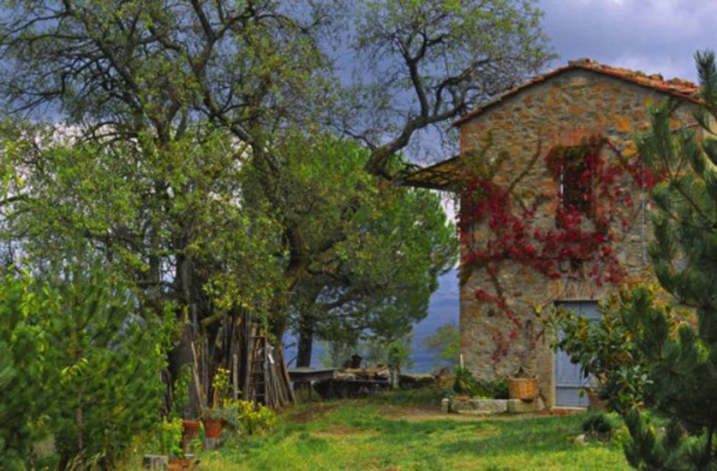 Seggiano Italy : Stock Photo
