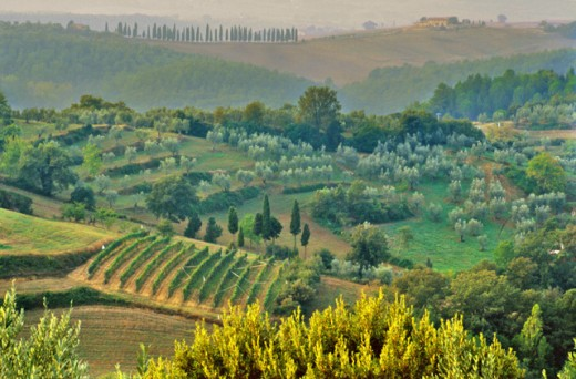 Stock Photo: 1429-118 High angle view of a field, Petroio, Italy