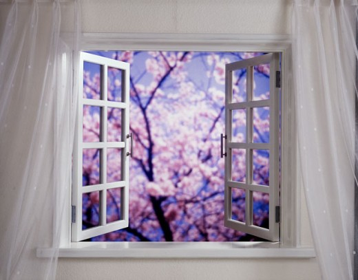 Blossoms on a tree viewed through a window : Stock Photo