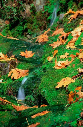 Stock Photo: 1436R-143097 Willamette National Forest. Oregon. USA
