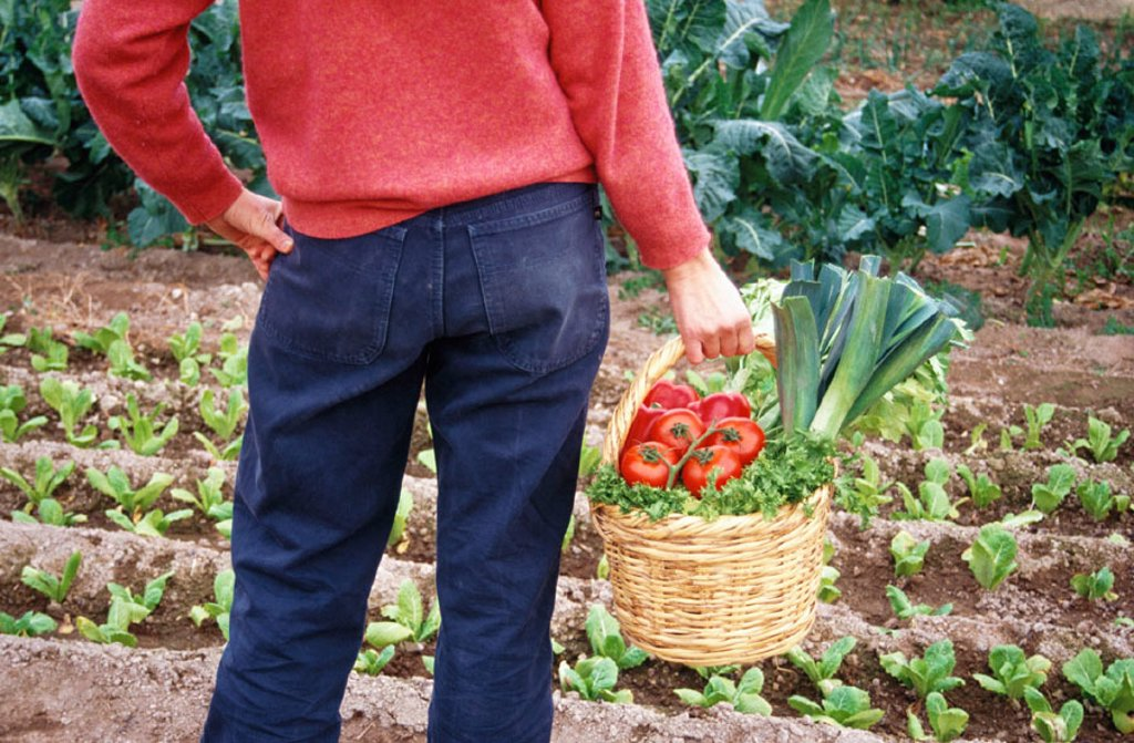 Organic farming : Stock Photo