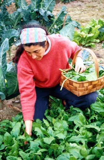 Organic farming : Stock Photo