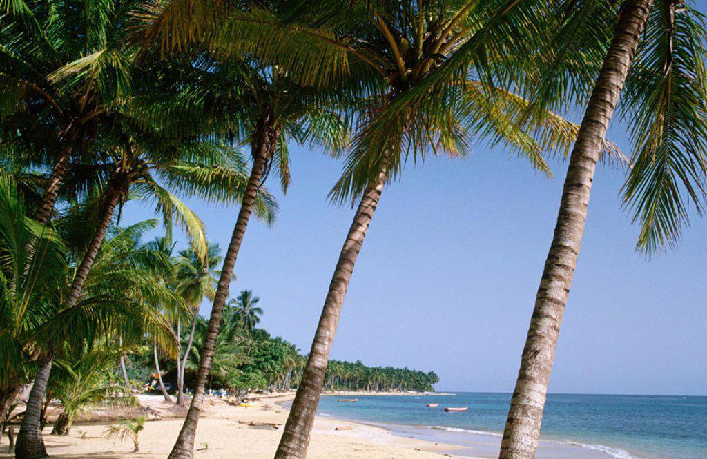 Las Terrenas Dominican Republic : Stock Photo