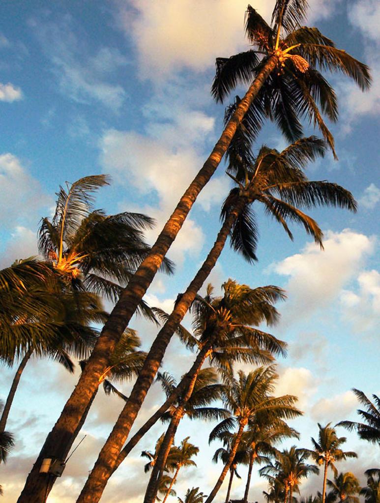 Stock Photo: 1436R-252840 Sunset palms. Hawaii, USA