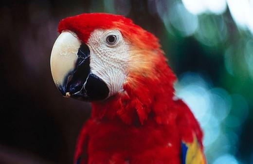 Stock Photo: 1436R-254046 Macaw
