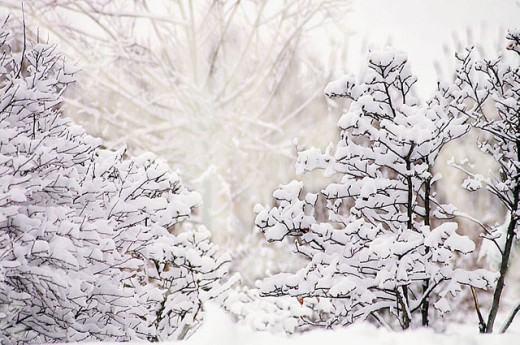 After the snowstorm. Maryland, USA : Stock Photo